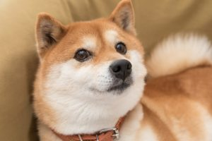 1 Reason to Invest in Dogecoin -- and 2 Reasons Not to
